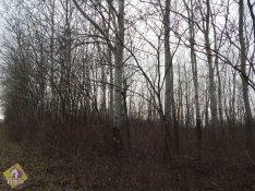 Eladó erdő, Kétegyháza