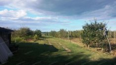Eladó mezőgazdasági ingatlan Kecskemét, hunyadiváros