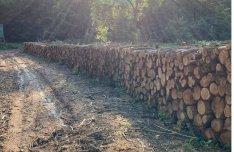 Erdőgazdálkodótól akác tűzifa
