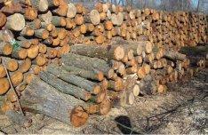Erdőgazdálkodótól tölgy tűzifa
