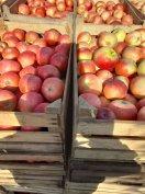 Étkezési alma eladó Nyíregyházán