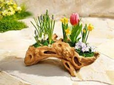 Fagyökér virágtartó