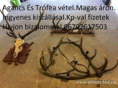 Keresek: Ágancs trófea vadászat hagyaték felvásárlás országosan