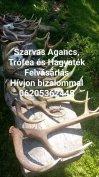 Keresek: Ágancs vétel Magyarország egész területén