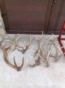Keresek: Borsod megye egész területén ágancsot és trófea felvásárlás