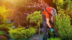 Kertész állás