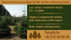Kijelölhető normand fenyő, nordmann, ezüstfenyő, lucfenyő, luc fenyőfa