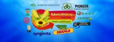 Kukorica vetőmag Dekalb Pioneer Syngenta 2021 előszezon