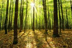 Nógrád megyében 40 hektárnyi erdő eladó!