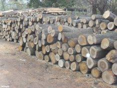 Nyári tűzifa akció termelésből, vegyes kemény tűzifa
