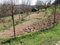 Salgótarján, Kotyházán telek eladó gyümölcsfákkal