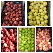 Szabolcsi Termelői almavásár Újpesten alma eladó étkezési alma