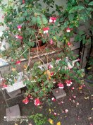 Szobai cserepes virágok kiárusítása helyhiány miatt