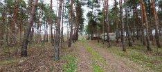 Telephelynek, iparterületnek alkalmas erdő eladó Pakson!