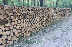 Tűzifa akció termelésből