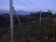 Vadháló kerítés