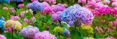 Virágkötő munkatársat keresünk