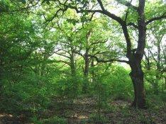 Zalacsány legszebb részén panorámás mezőgazdasági terület/erdő eladó!