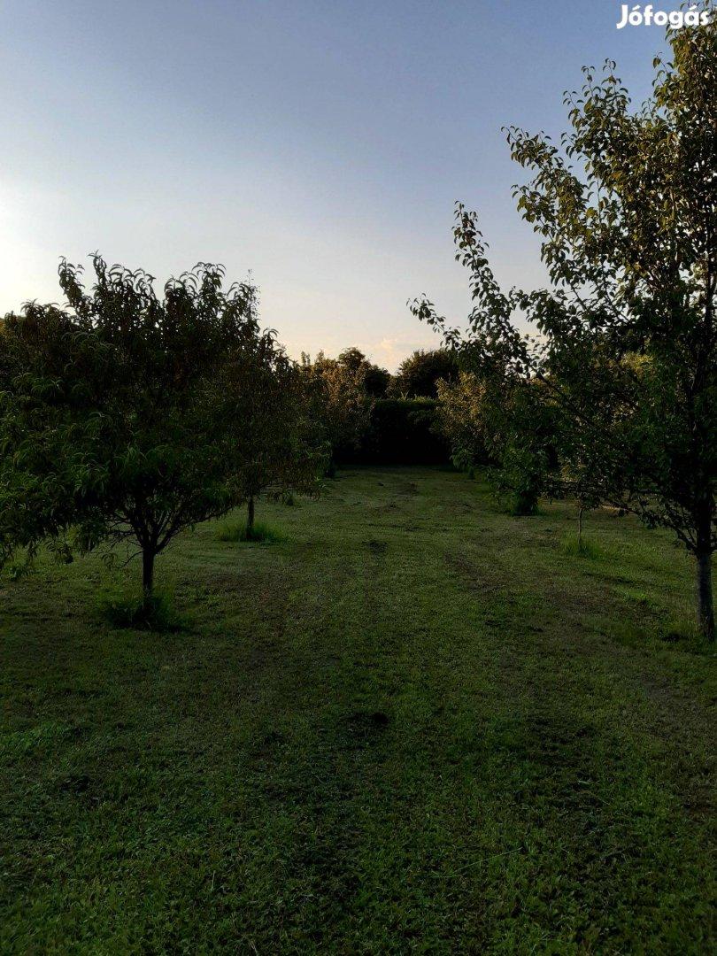 4000 m2-es zártkert termő gyümölcsfákkal eladó