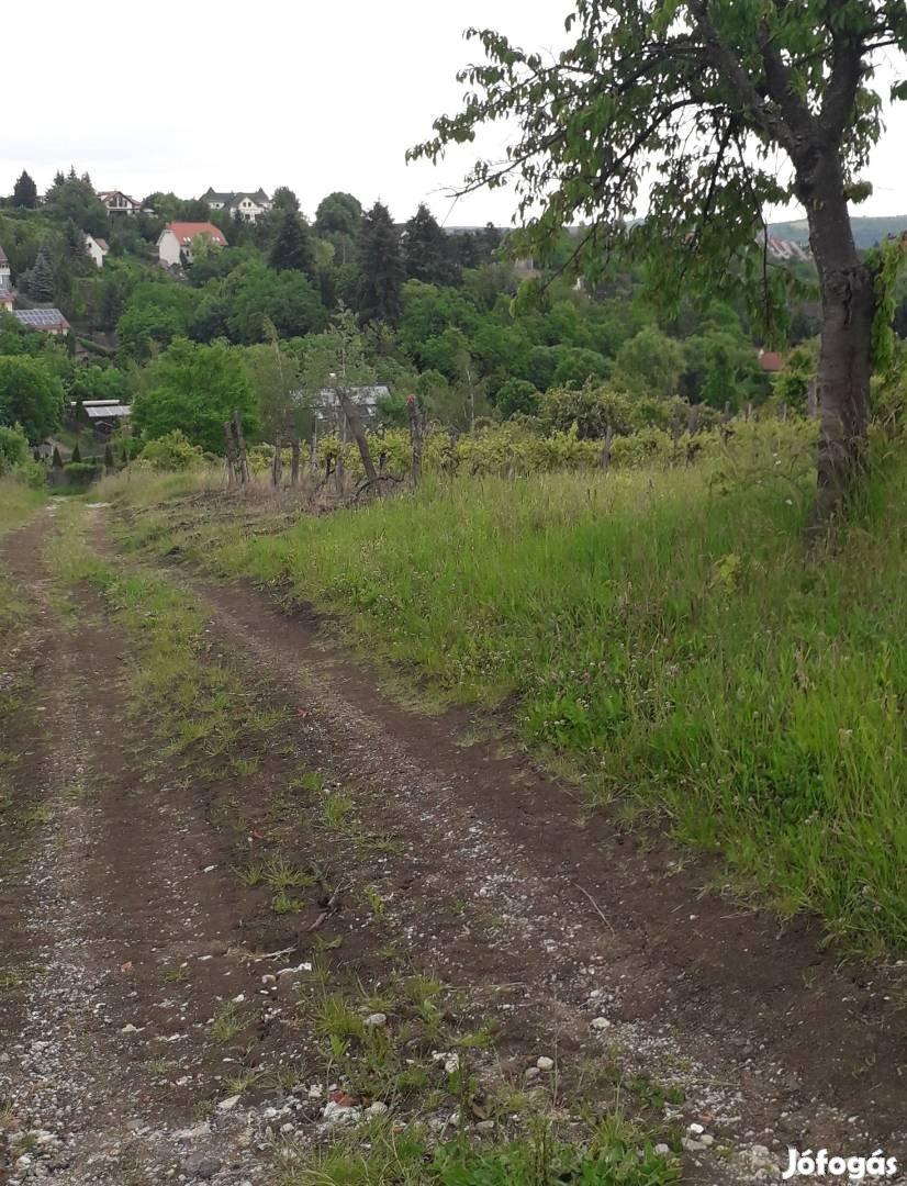 Egerben, a Szépasszony völgyben építésre alkalmas telek eladó