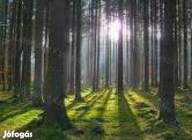 Eladó erdő hosszútávú befektetésre