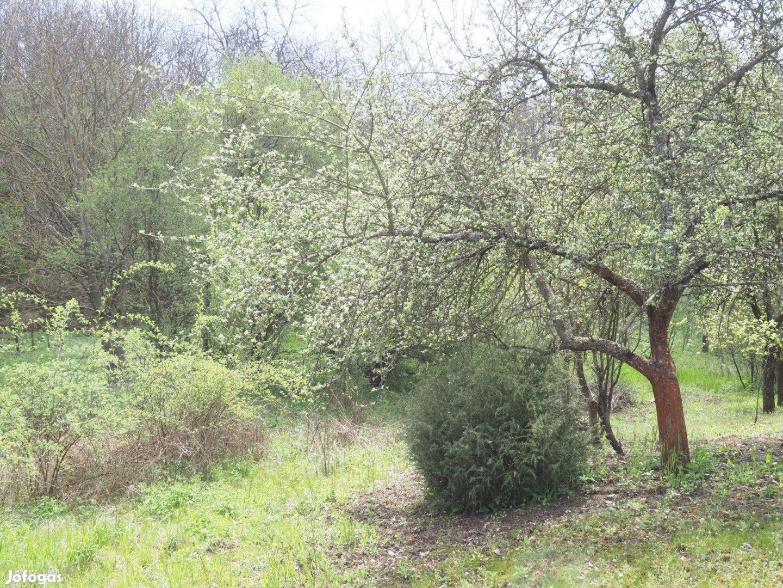 Eladó kert, gyümölcsös, Eger