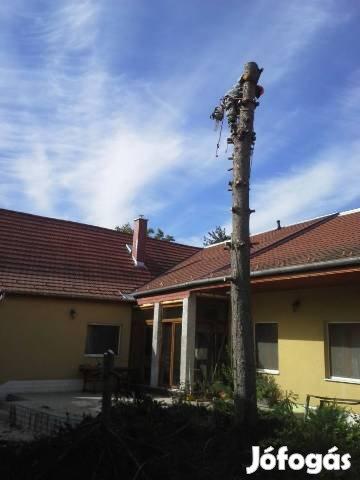 Favágás, fakivágás alpintechnikával Budapest, Pest és Fejér megye