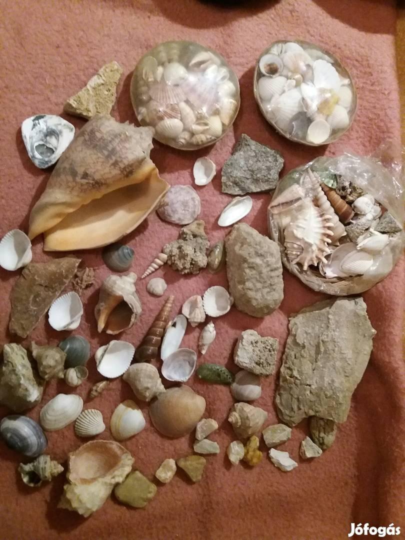 Kagyló- és kristálykövek gyűjteményből