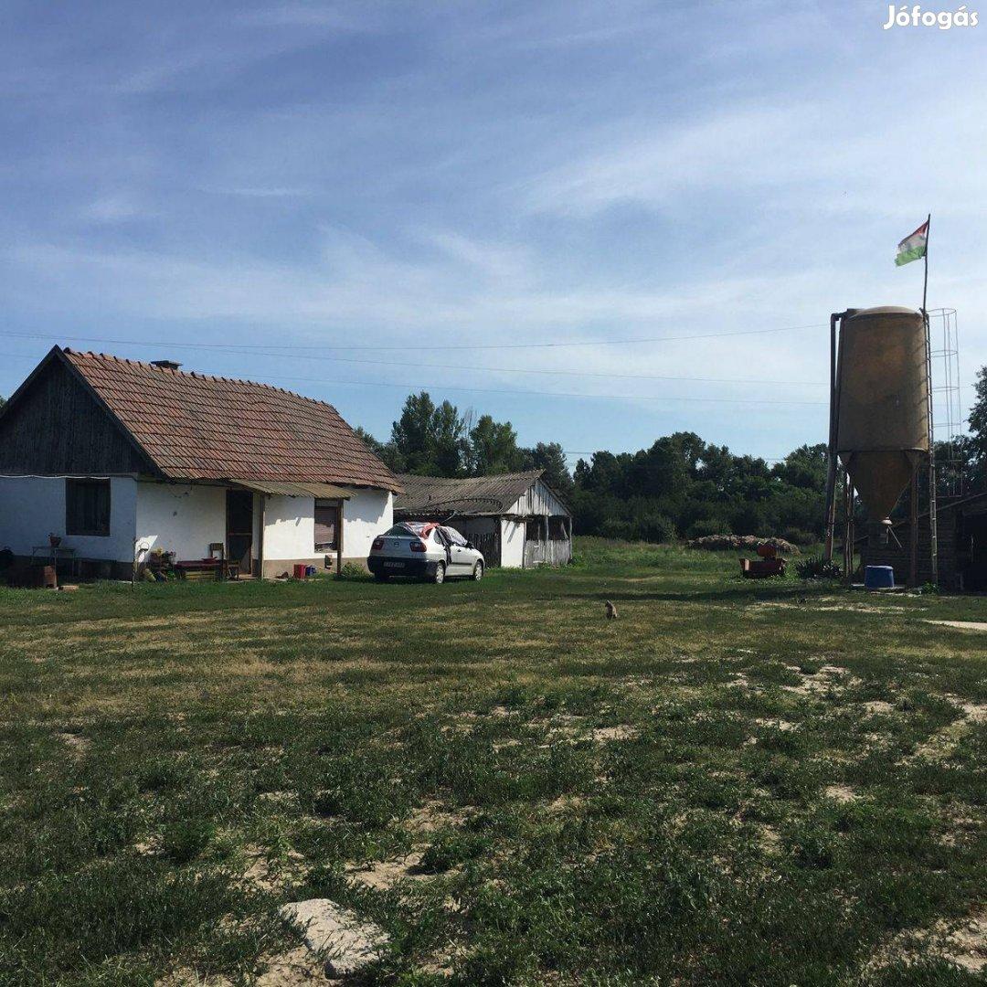 Kiskunhalas Alsószőlők, libanevelő komplexum kis tanyával eladó-kiadó!