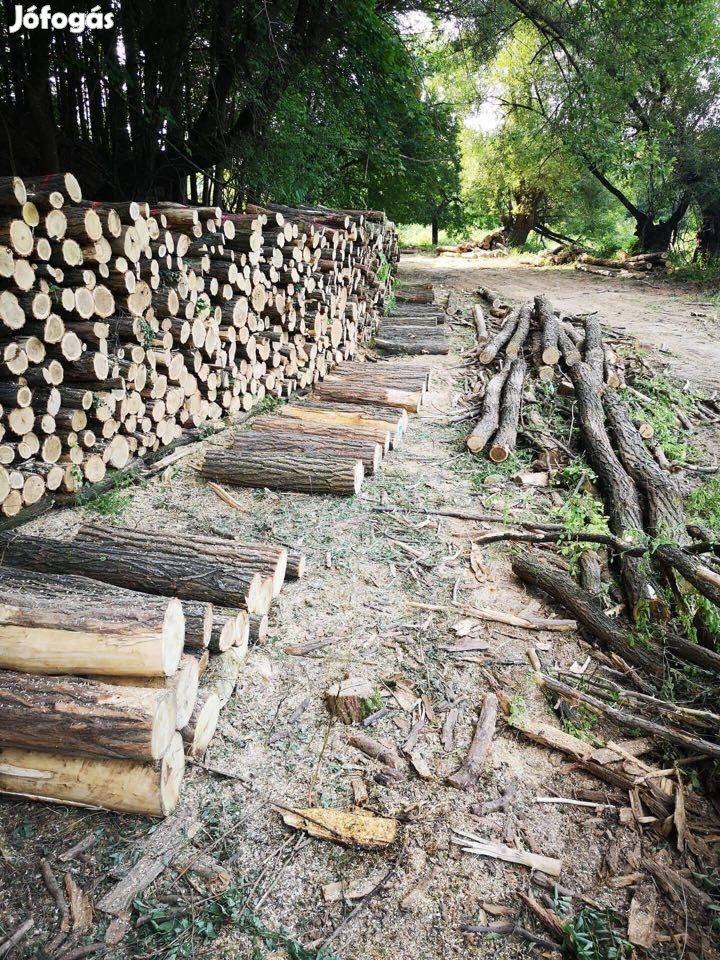 Közvetlen erdőgazdálkodótól 1*1*1mben