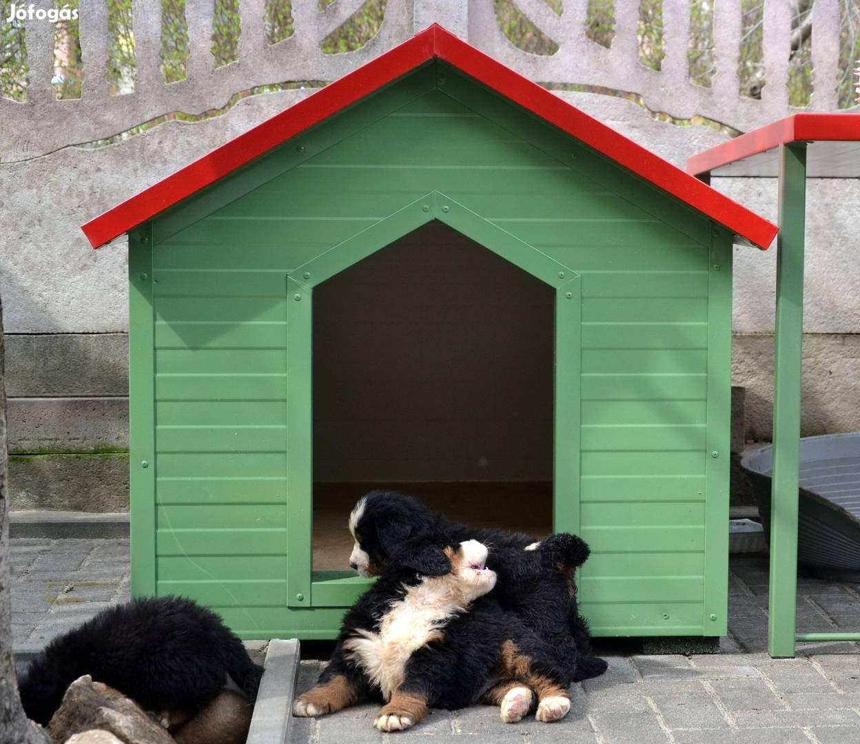 Kutyaház rághatatlan minőségi gyártásban szakemberektől