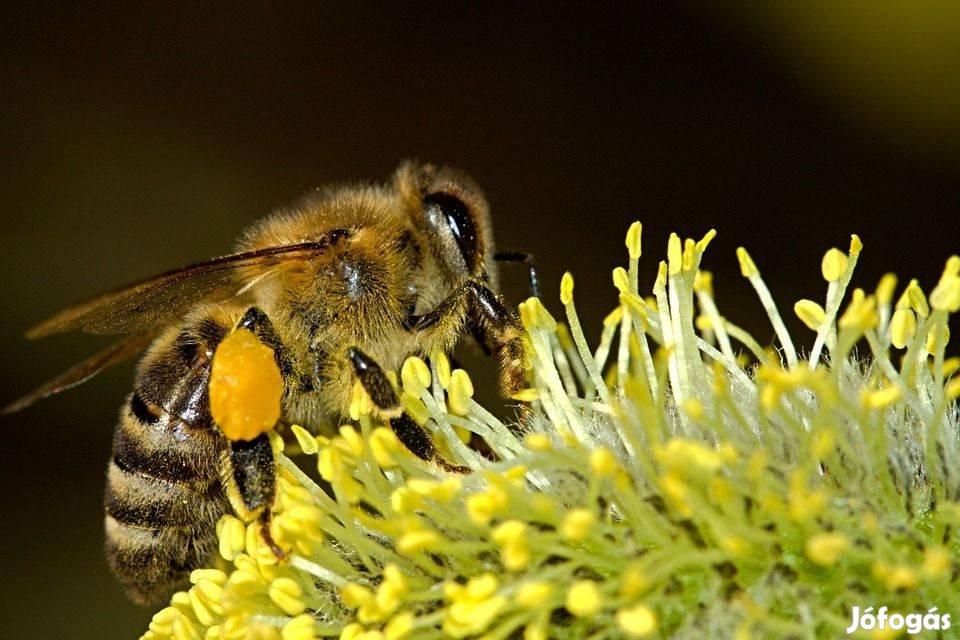 Méhész OKJ-s képzés
