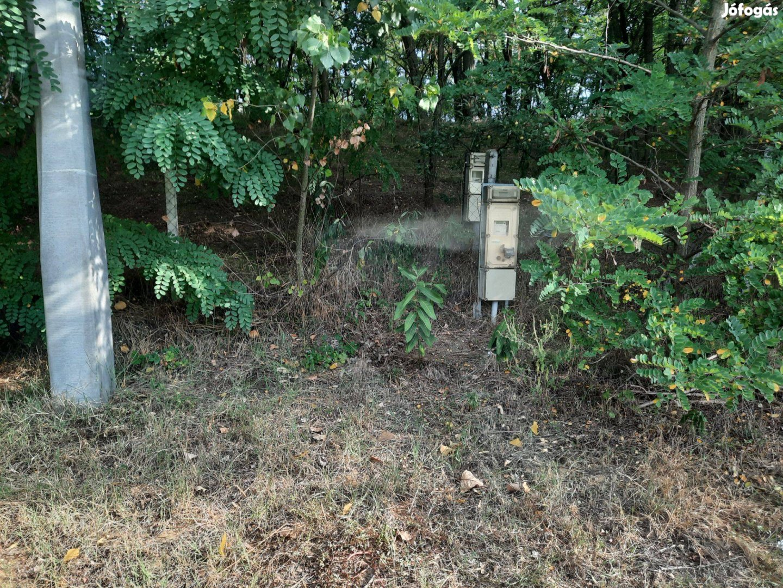 Sóstóhegyen eladó 13Ha-os erdő, lakóparknak alkalmas területtel
