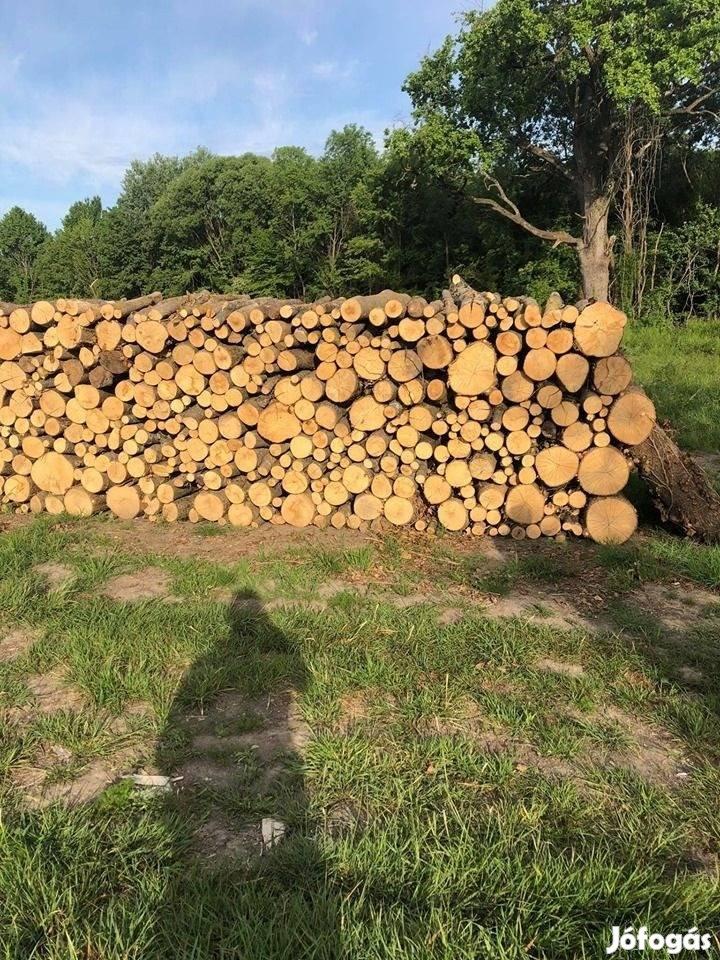 Vegyes kemény tűzifa termelőtől /tölgy/kőris/akác/